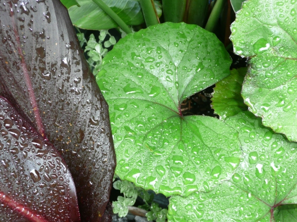 Water Droplets on Leaves - Different colors and textures