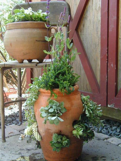 Succulents Rent
