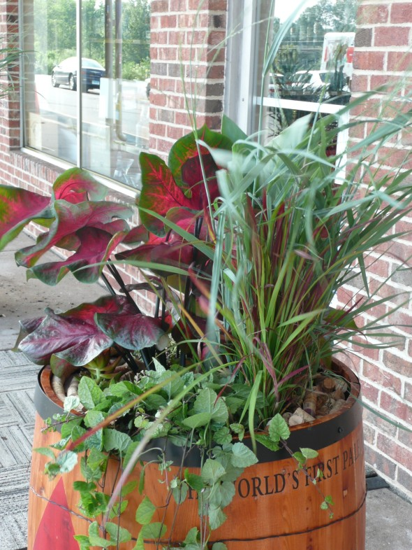 Barrel at a local Liquor Store are filled seasonally with various mix of plants