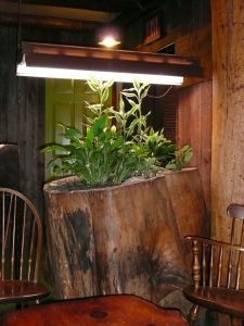Filled with Houseplants