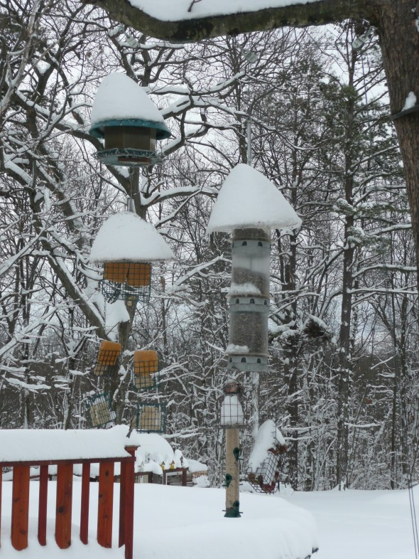 Winter shot of Steve's birdfeeders, loaded one year during a storm.