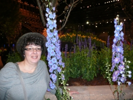 Where else can you see Delphiniums in winter? At a garden flower show of course!