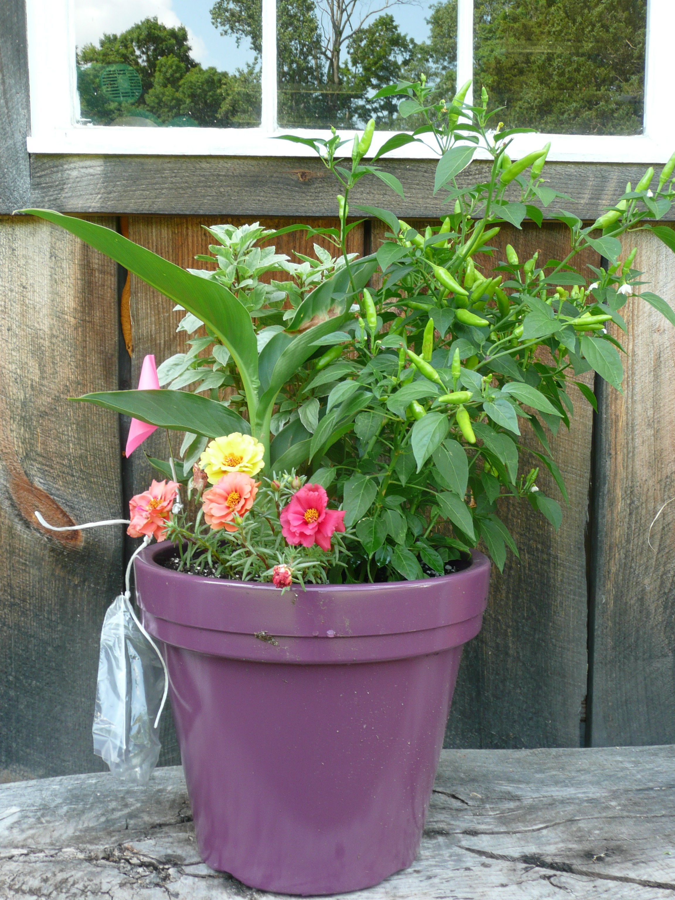 The fashionable and hot capsicum super chili pepper container