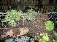 Dog Add Plants
