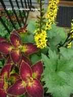 Blooms Atop