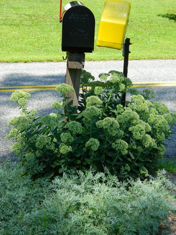 Mailbox Plantings (2/4)