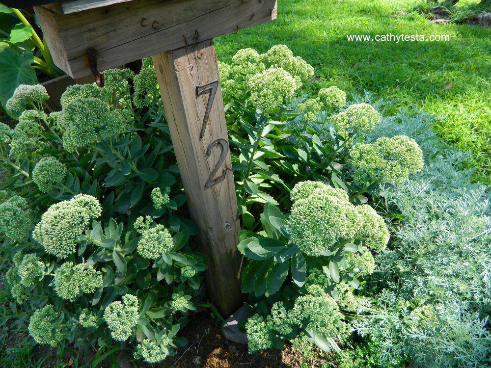 Mailbox Plantings (1/4)