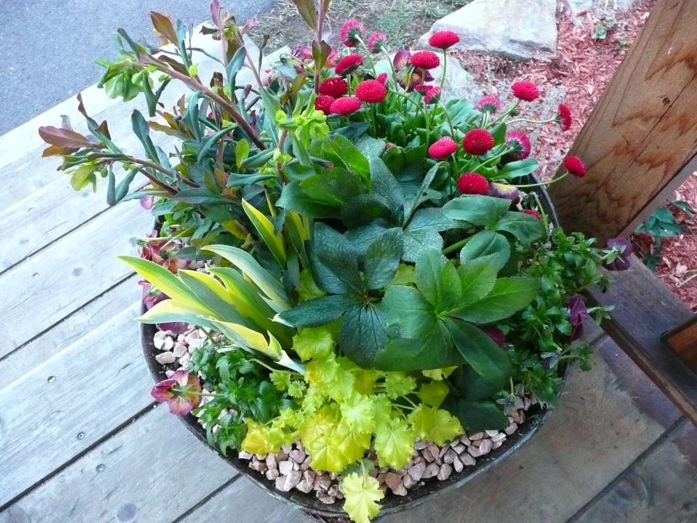 Container Garden Services (1/6)