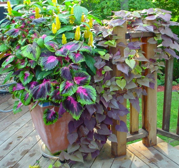 Deck Decor by Cathy T