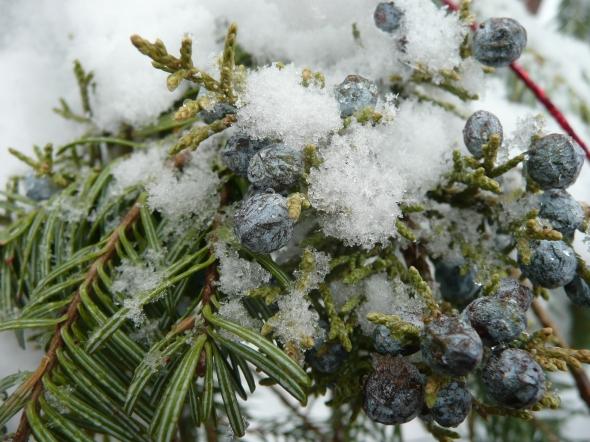 winter jun
