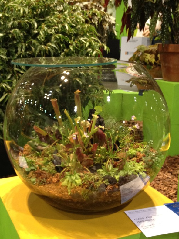 Globe Size Terrariums in Competition Areas at Philly Flower Show