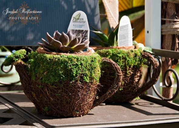Tea Cup Heaven, Photo by Joyful Reflections Photography