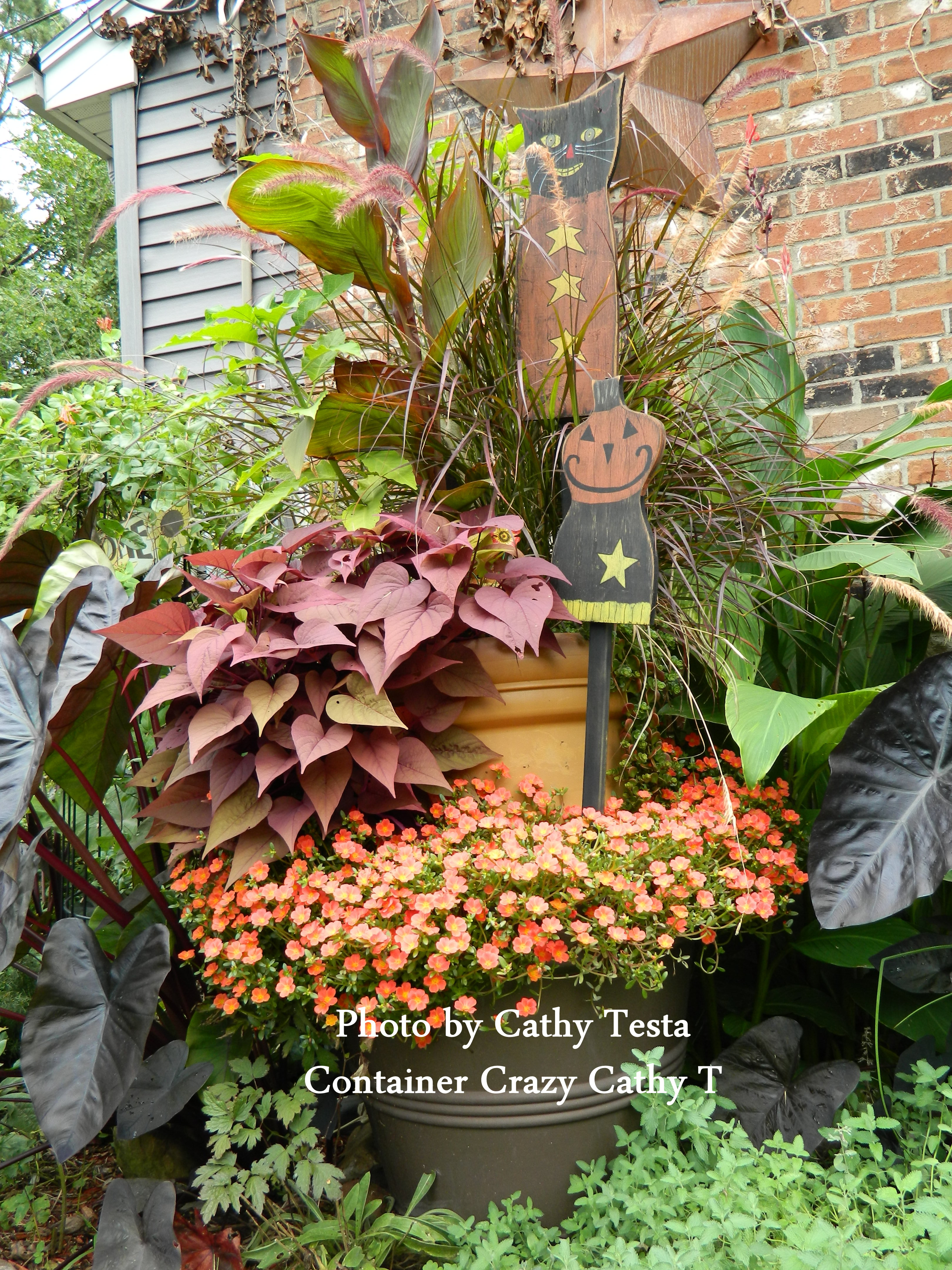 CONTAINER GARDENING | Container Crazy CT