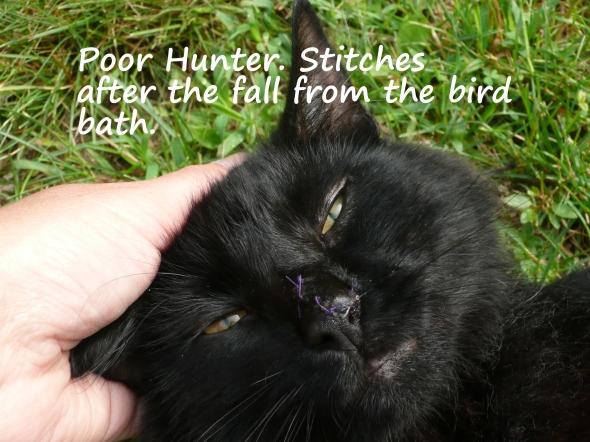 Hunters Stitches