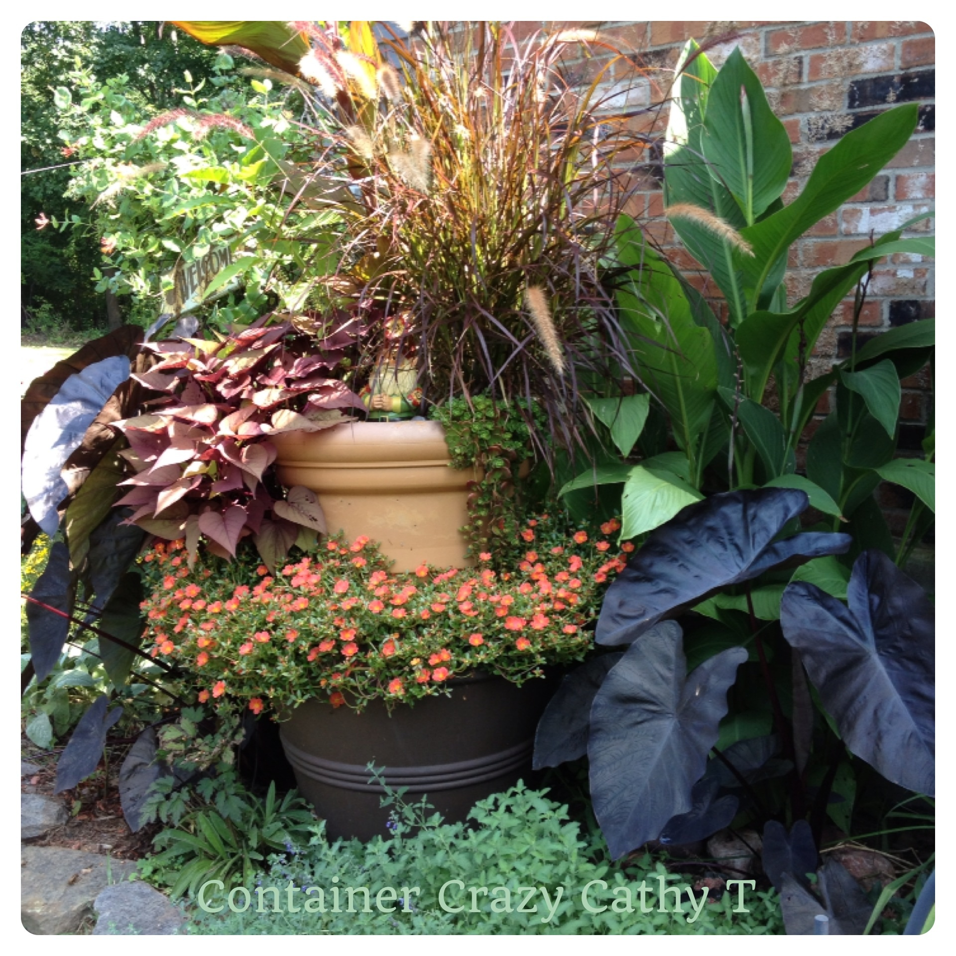 Elephant ears container crazy ct for Planting a garden