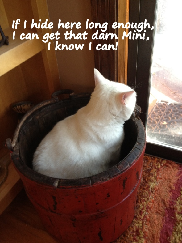 Waiting for Mini to return inside.