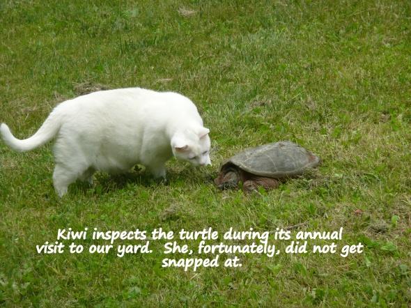 Easy does it, Kiwi !