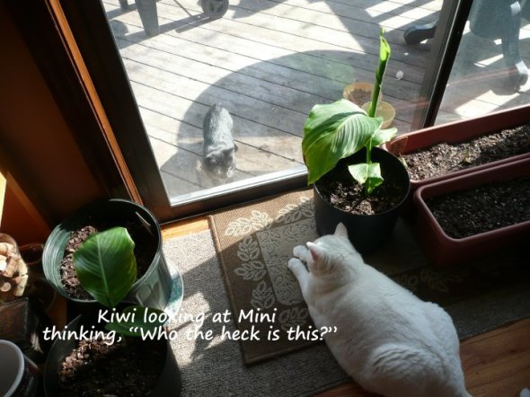 Mini looking at Kiwi, or Kiwi looking at Mini.