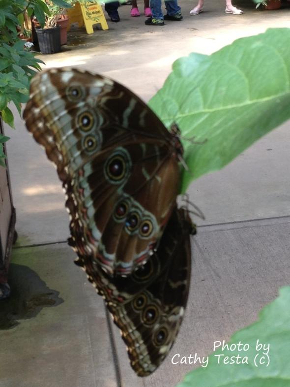Ow Butterflies