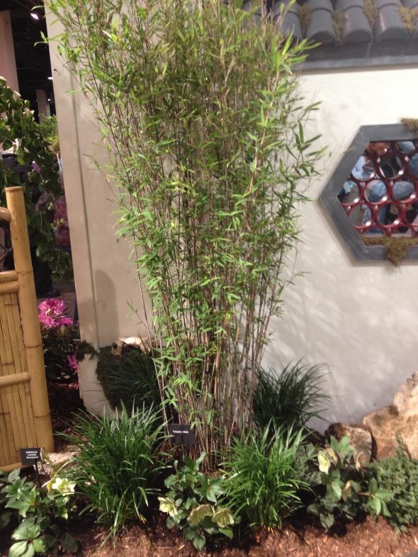 Bamboo with Helleborus perennial