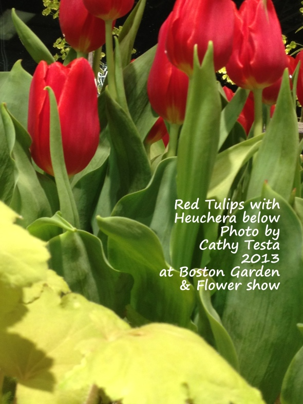 Close up of red Tulips with Heuchera