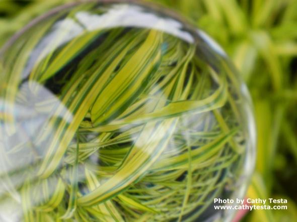 Hakon grass 'Aureola'