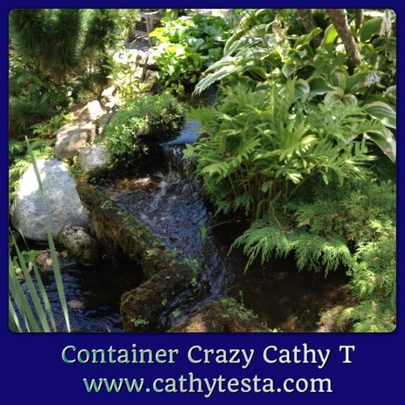 Water garden Gledhill