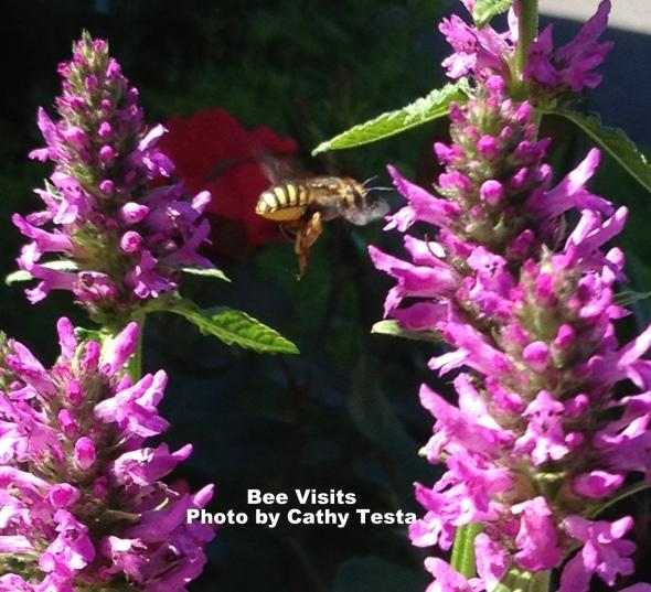 Supports Pollinators