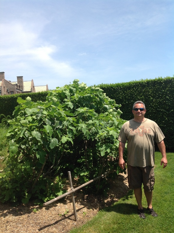 Steve next to Fig Trees in the Kitchen Garden