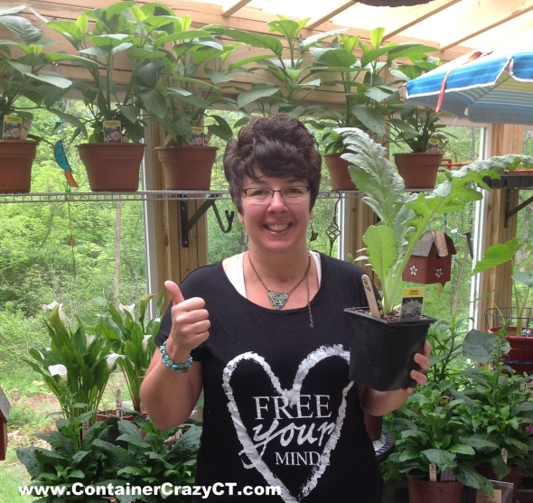 Cathy T excited to share unique plants at her workshops. 2015.