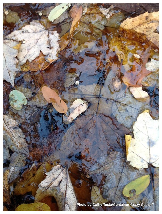Birdbath frozen with fall leaves