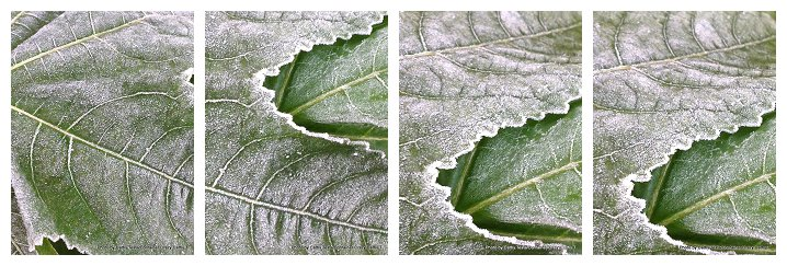 First Frost_0012