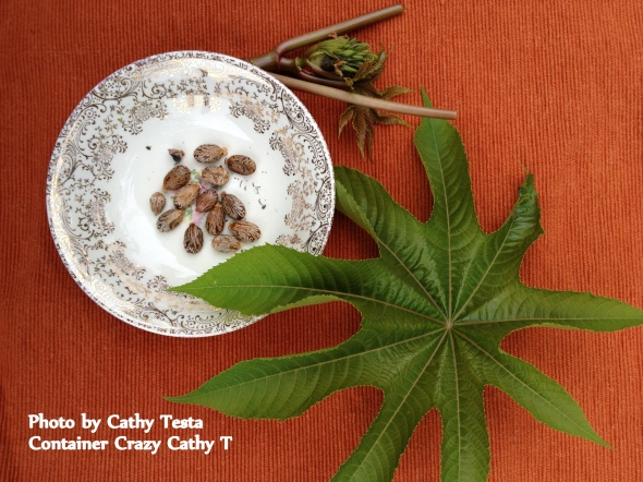 Castor Bean Seeds with a Leaf