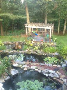 Rhondas Pond Garden