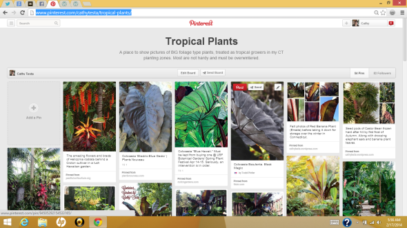 http://www.pinterest.com/cathytesta/tropical-plants/