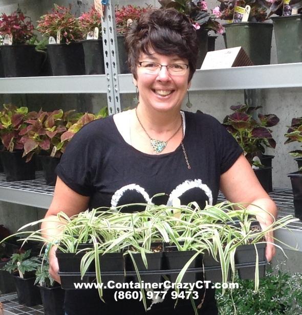 House plant fun