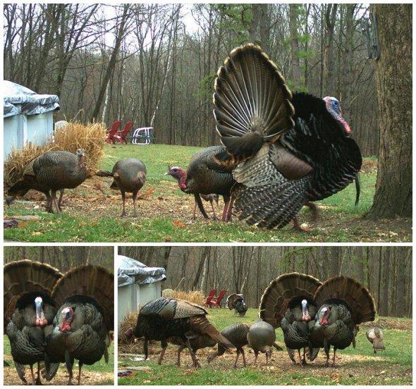 Turkey Testa_0024