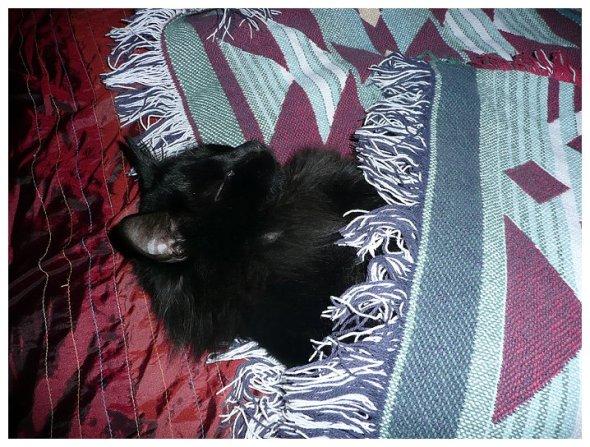 My cat Hunter.  He is a screamer - meows very loud when he wants something.