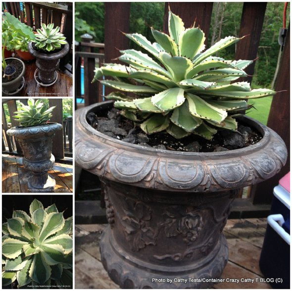 Repotted into Urn
