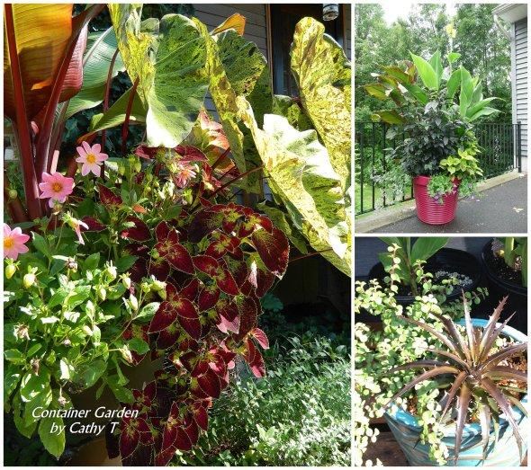 Cathy Testa Container Gardens_0011