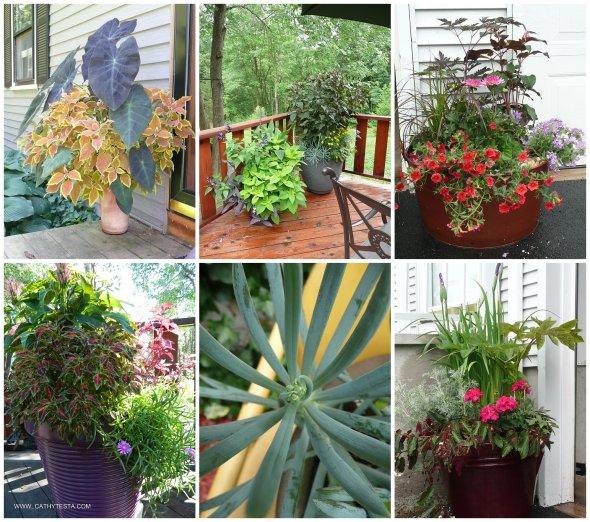 Cathy Testa Container Gardens_0014