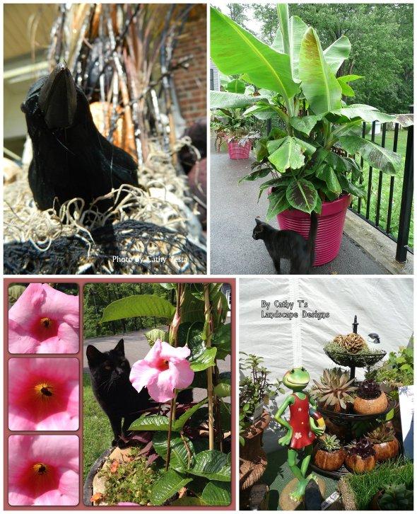 Cathy Testa Container Gardens_0019