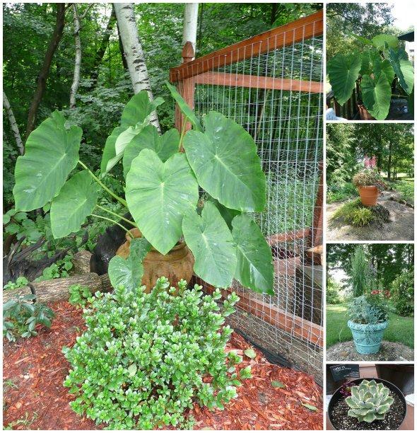 Cathy Testa Container Gardens_0022