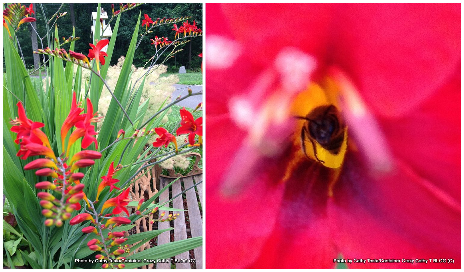 Flashback Friday Crocosmia Perennial With Fire Red Blooms In A Power Plant Layout 0004