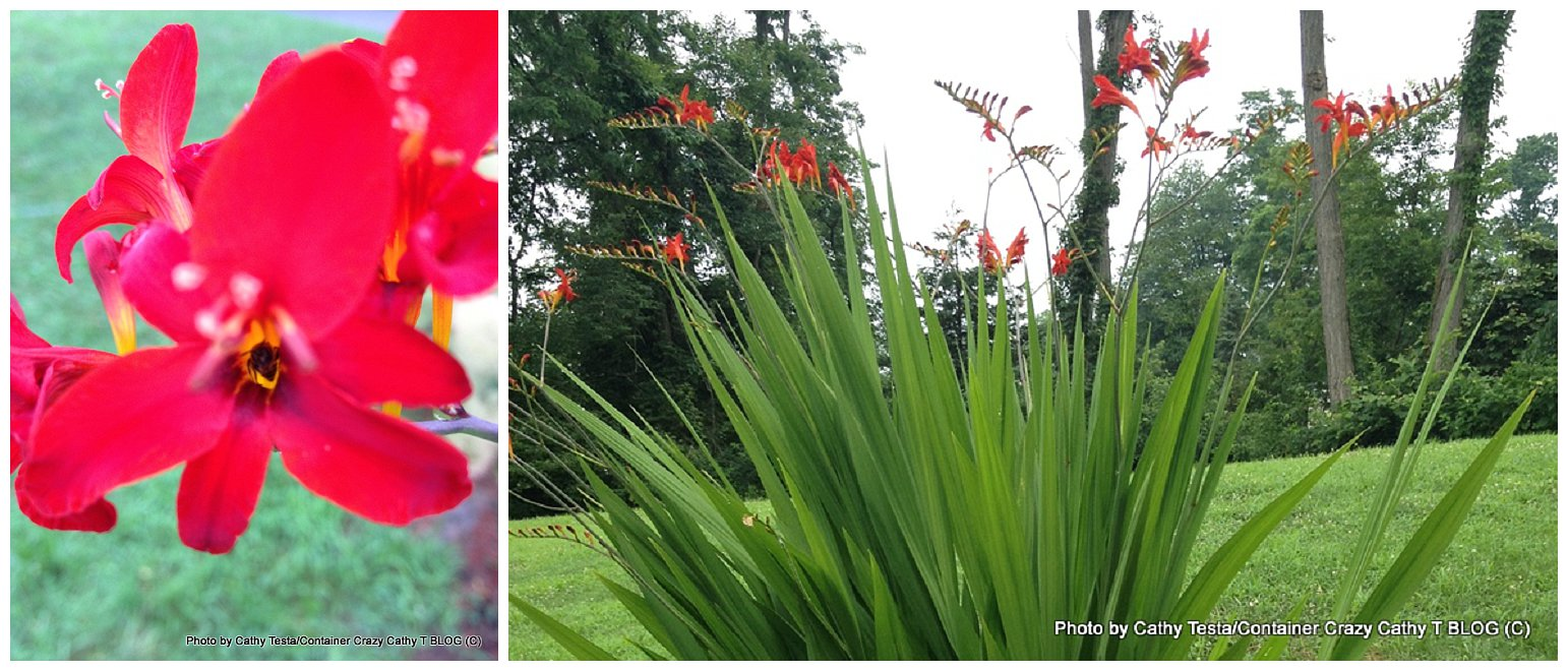 Flashback Friday Crocosmia Perennial With Fire Red Blooms In A Power Plant Layout 0005