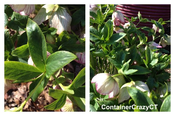 Spring Plants_0018