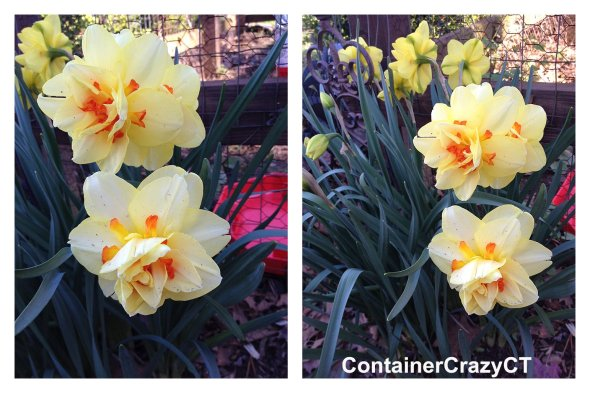 Spring Plants_0019