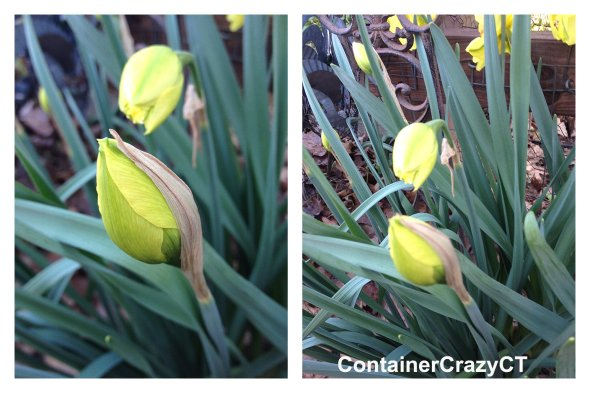 Spring Plants_0020
