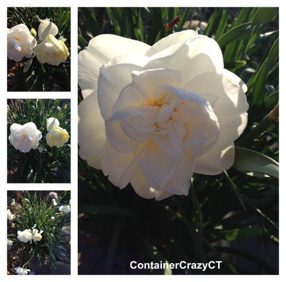 Spring Plants_0027