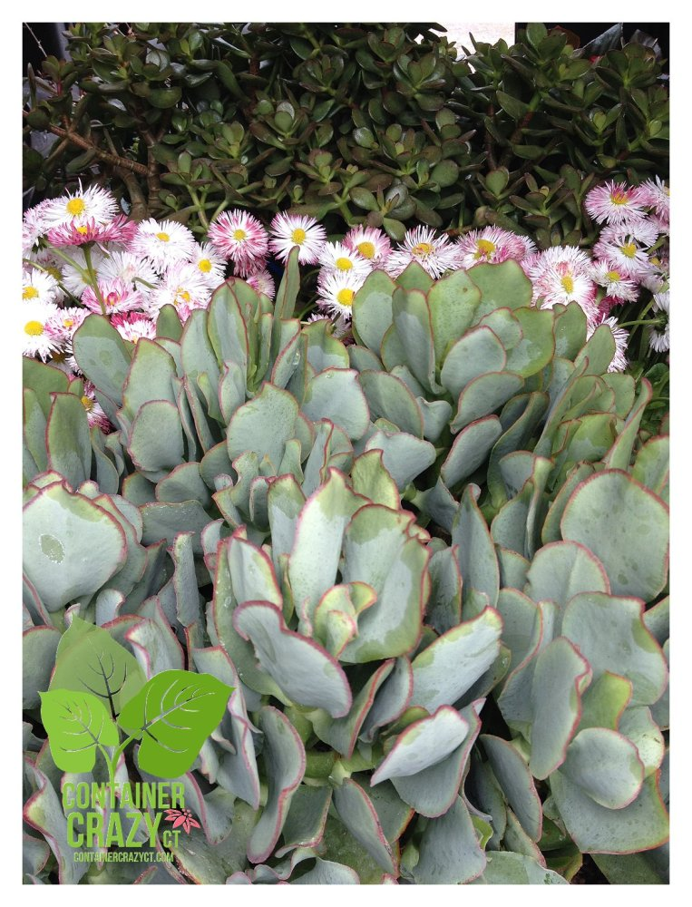 Cathy T at the Ellington Farmers Market - Edibles, Succulents, and More (6/6)